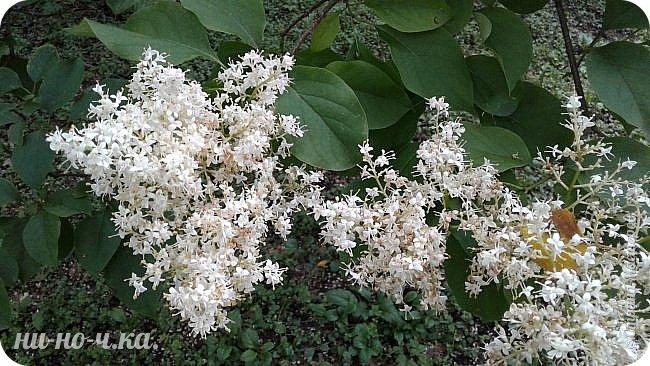 Здравствуйте!!! Сегодня я предлагаю вам совершить со мной прогулку по Ботаническому саду. фото 12