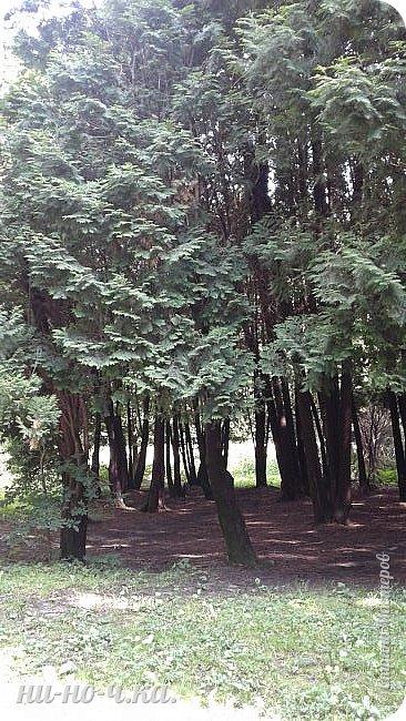 Здравствуйте!!! Сегодня я предлагаю вам совершить со мной прогулку по Ботаническому саду. фото 18