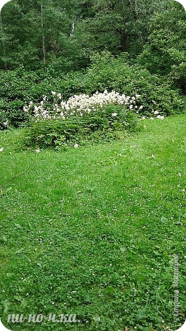 Здравствуйте!!! Сегодня я предлагаю вам совершить со мной прогулку по Ботаническому саду. фото 24