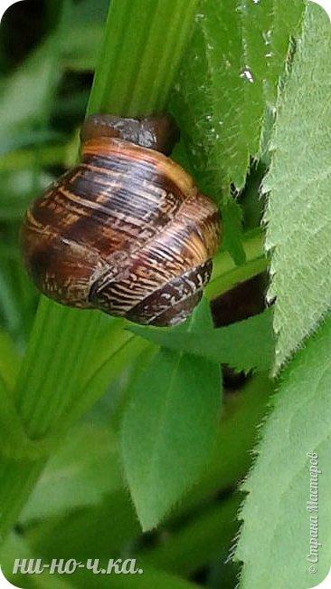 Здравствуйте!!! Сегодня я предлагаю вам совершить со мной прогулку по Ботаническому саду. фото 26