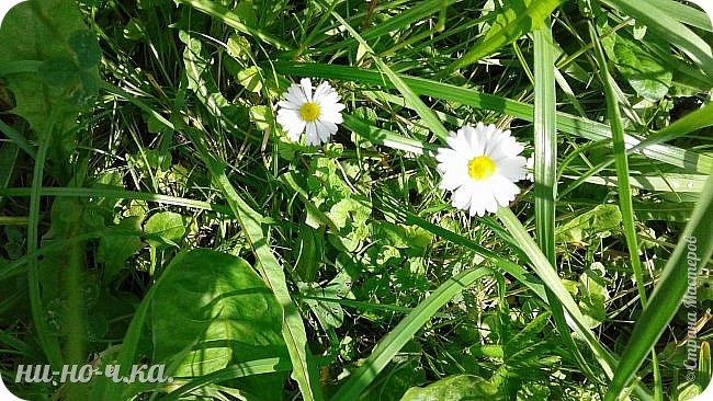 Здравствуйте!!! Сегодня я предлагаю вам совершить со мной прогулку по Ботаническому саду. фото 37