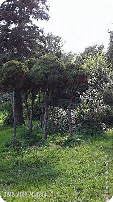 Здравствуйте!!! Сегодня я предлагаю вам совершить со мной прогулку по Ботаническому саду. фото 38