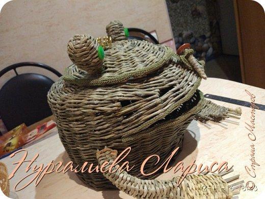 Лягушка-лучница фото 3
