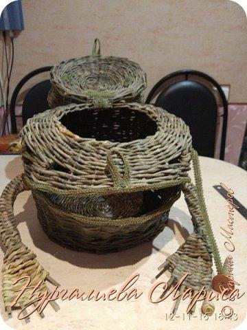 Лягушка-лучница фото 2