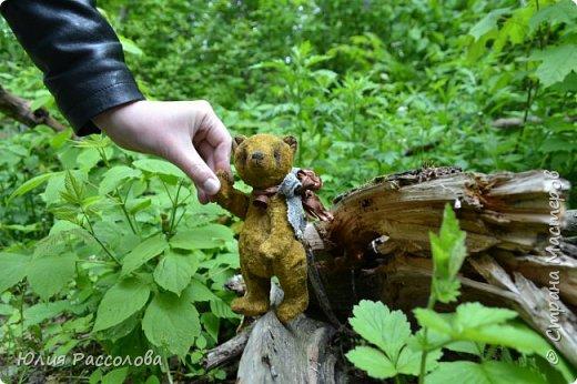 ..по страницам сказок, мишка-тедди, плюшевый мишка фото 3