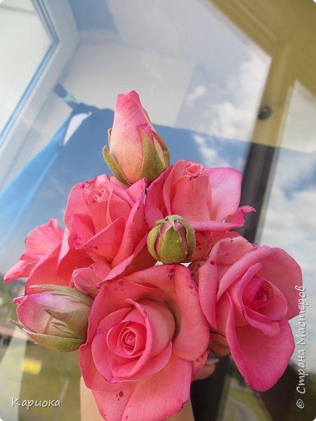 Добрый день!!  Наконец у нас настало лето - сегодня без куртки на улицу выйти можно) По поводу отличного настроения и солнечного дня отфоткала своих садовых малышек.   В прошлом году делала таких же из ХФ  http://stranamasterov.ru/node/1045248  , а сейчас решила попробовать из фома сделать. фото 1