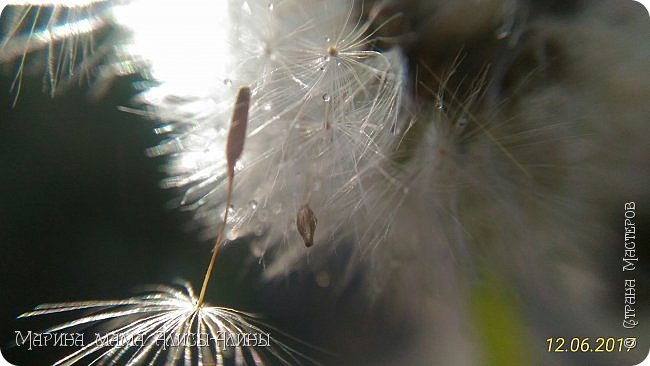 Немножко моих июньских фоток... фото 3