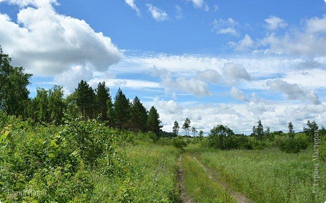 Доброго времени суток, жители Страны Мастеров. Приглашаю вас прогуляться по лесу. Запасаемся чаем, бутербродами и обязательно кремом от комаров и мошки. Пошли. фото 1