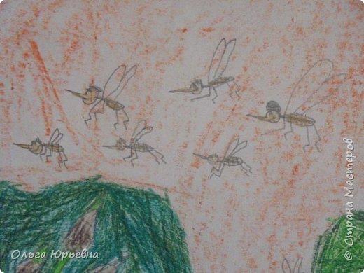 Вот и закончилась неделя насекомых. Некоторые итоги. фото 6