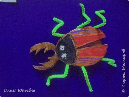 Вот и закончилась неделя насекомых. Некоторые итоги. фото 8