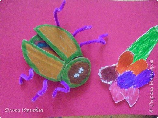 Вот и закончилась неделя насекомых. Некоторые итоги. фото 9