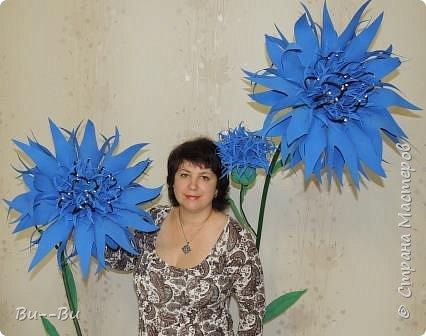 Здравствуйте. Хочу поделиться своими ростовыми васильками из фоамирана. фото 1