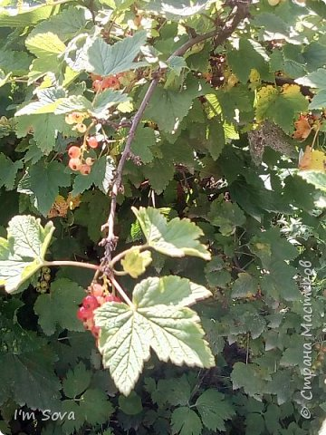 Скоро гроза... фото 8