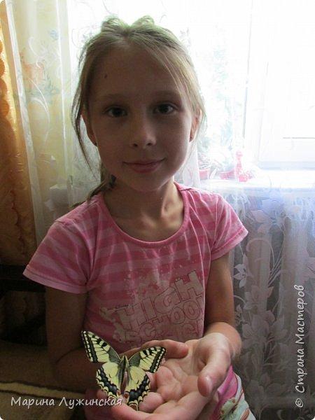 Вчера у нас произошло самое яркое событие этого незабываемого лета!!! У нас родилась бабочка!!!  Знакомьтесь, наш махаончик Июлька!  фото 8