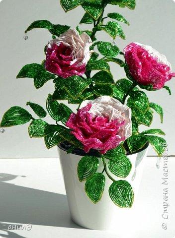 Кустик с розами фото 2