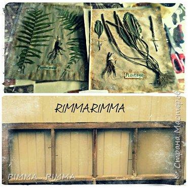 Доброго времени суток!!!!! Хочу представить Вам свои работы, это рамы для гербария и для фото. Их я смастерила из частей старой оконной рамы. Идею подсмотлела так-же в интернете. фото 2