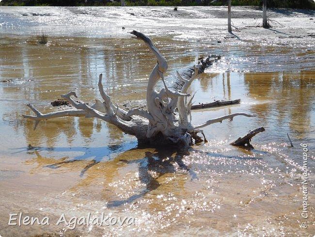 Продолжаю делится впечатлениями от поездки в Йе́ллоустон (Yellowstone National Park)— международный биосферный заповедник, объект Всемирного Наследия ЮНЕСКО, первый в мире национальный парк (основан 1 марта 1872 года). Находится в США, на территории штатов Вайоминг, Монтана и Айдахо. Парк знаменит многочисленными гейзерами и другими геотермическими объектами, богатой живой природой, живописными ландшафтами. ( взято из Википедии ) Мы останавливались в кемпингах в палатках. Парк произвел на нас огромное впечатление. Очень хочется поделится с вами красотой которую я увидела.  В один фоторепортаж трудно вместить все увиденное.  фото 7