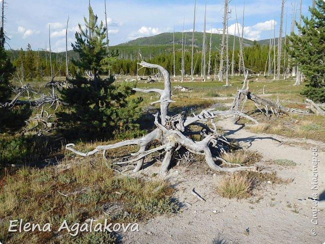 Продолжаю делится впечатлениями от поездки в Йе́ллоустон (Yellowstone National Park)— международный биосферный заповедник, объект Всемирного Наследия ЮНЕСКО, первый в мире национальный парк (основан 1 марта 1872 года). Находится в США, на территории штатов Вайоминг, Монтана и Айдахо. Парк знаменит многочисленными гейзерами и другими геотермическими объектами, богатой живой природой, живописными ландшафтами. ( взято из Википедии ) Мы останавливались в кемпингах в палатках. Парк произвел на нас огромное впечатление. Очень хочется поделится с вами красотой которую я увидела.  В один фоторепортаж трудно вместить все увиденное.  фото 43