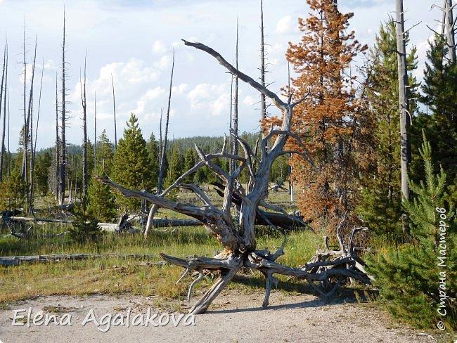 Продолжаю делится впечатлениями от поездки в Йе́ллоустон (Yellowstone National Park)— международный биосферный заповедник, объект Всемирного Наследия ЮНЕСКО, первый в мире национальный парк (основан 1 марта 1872 года). Находится в США, на территории штатов Вайоминг, Монтана и Айдахо. Парк знаменит многочисленными гейзерами и другими геотермическими объектами, богатой живой природой, живописными ландшафтами. ( взято из Википедии ) Мы останавливались в кемпингах в палатках. Парк произвел на нас огромное впечатление. Очень хочется поделится с вами красотой которую я увидела.  В один фоторепортаж трудно вместить все увиденное.  фото 45