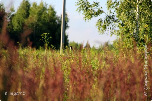 Здравствуйте,мои дорогие!!! Спешу поделиться новой порцией позитива)) В пятницу,21.07.17, прошёл дождь и я вышла в огород с фотоаппаратом)) Капли на диком(девичий)винограде фото 28