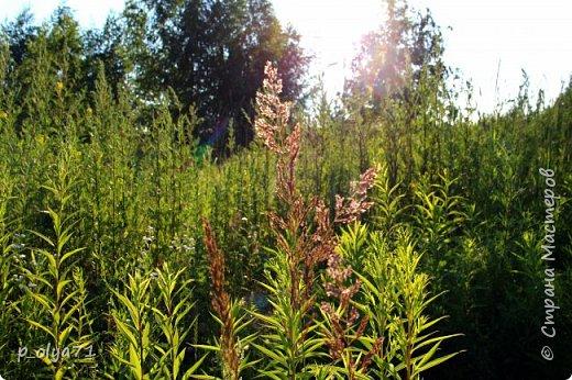 Здравствуйте,мои дорогие!!! Спешу поделиться новой порцией позитива)) В пятницу,21.07.17, прошёл дождь и я вышла в огород с фотоаппаратом)) Капли на диком(девичий)винограде фото 18
