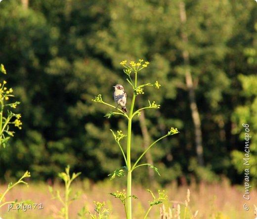 Здравствуйте,мои дорогие!!! Спешу поделиться новой порцией позитива)) В пятницу,21.07.17, прошёл дождь и я вышла в огород с фотоаппаратом)) Капли на диком(девичий)винограде фото 31