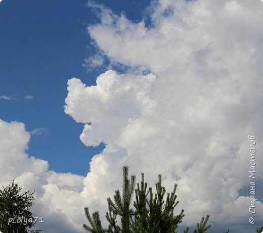 Здравствуйте,мои дорогие!!! Спешу поделиться новой порцией позитива)) В пятницу,21.07.17, прошёл дождь и я вышла в огород с фотоаппаратом)) Капли на диком(девичий)винограде фото 45