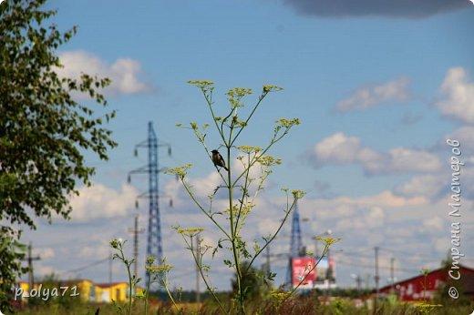 Здравствуйте,мои дорогие!!! Спешу поделиться новой порцией позитива)) В пятницу,21.07.17, прошёл дождь и я вышла в огород с фотоаппаратом)) Капли на диком(девичий)винограде фото 37