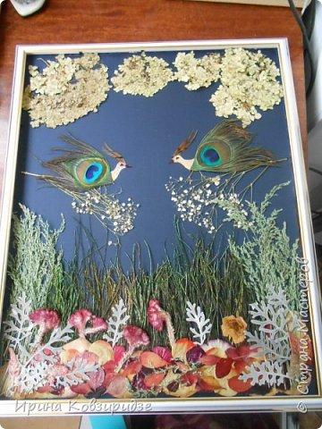 """Сделала на заказ несколько картин. Первая - """"Райские птички"""". Размер 40х50см. Основа- тёмно-синий шёлк. Перья павлина в качестве травы на заднем фоне и в самих птичках. Внизу картины - лепестки роз, листья барбариса для разноцветья. Фото сделано без стекла. фото 1"""