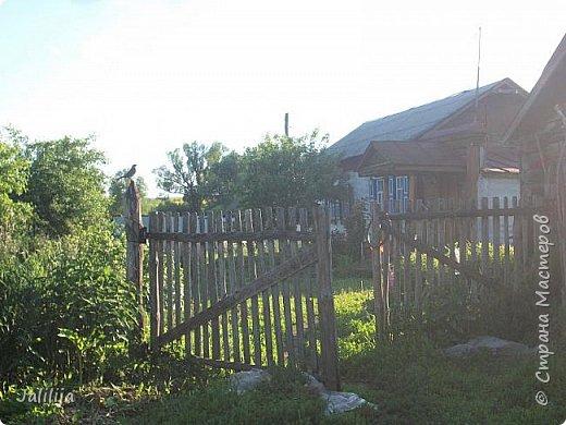 Ещё одна летняя история. Приехав однажды из города в деревню мы обнаружили какое-то движение под крышей старого сарая. фото 12