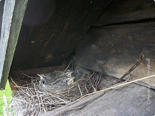 Ещё одна летняя история. Приехав однажды из города в деревню мы обнаружили какое-то движение под крышей старого сарая. фото 15