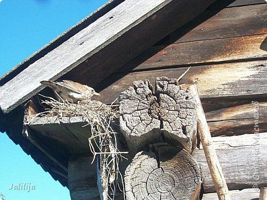 Ещё одна летняя история. Приехав однажды из города в деревню мы обнаружили какое-то движение под крышей старого сарая. фото 1