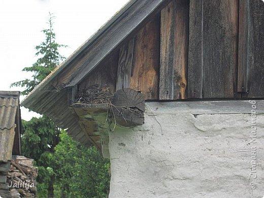 Ещё одна летняя история. Приехав однажды из города в деревню мы обнаружили какое-то движение под крышей старого сарая. фото 26