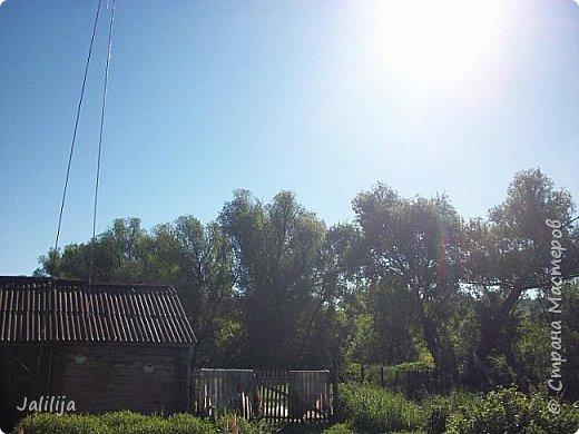 Ещё одна летняя история. Приехав однажды из города в деревню мы обнаружили какое-то движение под крышей старого сарая. фото 3