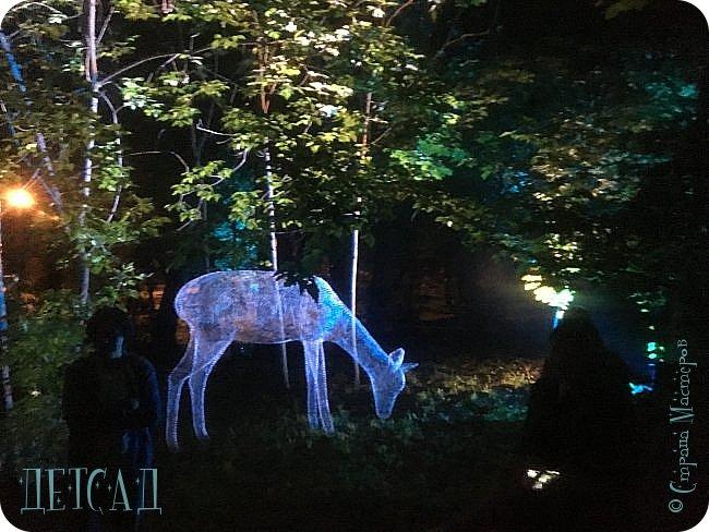 """Каждый день, после захода солнца вокруг пруда парка """"Останкино"""" оживает «Волшебный лес», созданный лучшими художниками световых инсталляций из Европы и России.  фото 3"""