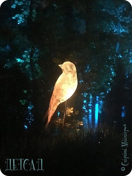 """Каждый день, после захода солнца вокруг пруда парка """"Останкино"""" оживает «Волшебный лес», созданный лучшими художниками световых инсталляций из Европы и России.  фото 1"""