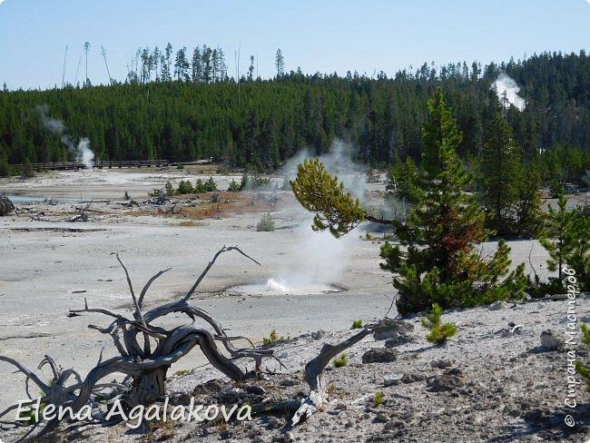 Продолжаю делится впечатлениями от поездки в Йе́ллоустон (Yellowstone National Park)— международный биосферный заповедник, объект Всемирного Наследия ЮНЕСКО, первый в мире национальный парк (основан 1 марта 1872 года). Находится в США, на территории штатов Вайоминг, Монтана и Айдахо. Парк знаменит многочисленными гейзерами и другими геотермическими объектами, богатой живой природой, живописными ландшафтами. ( взято из Википедии )  Мы останавливались в кемпингах в палатках. Парк произвел на нас огромное впечатление. Очень хочется поделится с вами красотой которую я увидела. В один фоторепортаж трудно вместить все увиденное поэтому это уже третий и будут еще...  фото 12