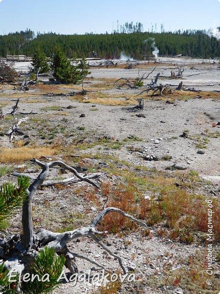Продолжаю делится впечатлениями от поездки в Йе́ллоустон (Yellowstone National Park)— международный биосферный заповедник, объект Всемирного Наследия ЮНЕСКО, первый в мире национальный парк (основан 1 марта 1872 года). Находится в США, на территории штатов Вайоминг, Монтана и Айдахо. Парк знаменит многочисленными гейзерами и другими геотермическими объектами, богатой живой природой, живописными ландшафтами. ( взято из Википедии )  Мы останавливались в кемпингах в палатках. Парк произвел на нас огромное впечатление. Очень хочется поделится с вами красотой которую я увидела. В один фоторепортаж трудно вместить все увиденное поэтому это уже третий и будут еще...  фото 13