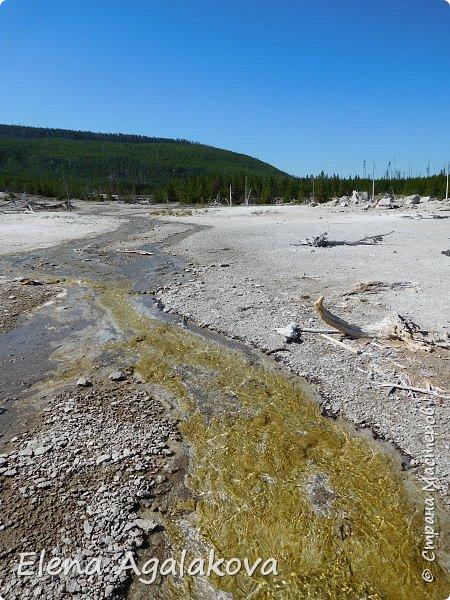 Продолжаю делится впечатлениями от поездки в Йе́ллоустон (Yellowstone National Park)— международный биосферный заповедник, объект Всемирного Наследия ЮНЕСКО, первый в мире национальный парк (основан 1 марта 1872 года). Находится в США, на территории штатов Вайоминг, Монтана и Айдахо. Парк знаменит многочисленными гейзерами и другими геотермическими объектами, богатой живой природой, живописными ландшафтами. ( взято из Википедии )  Мы останавливались в кемпингах в палатках. Парк произвел на нас огромное впечатление. Очень хочется поделится с вами красотой которую я увидела. В один фоторепортаж трудно вместить все увиденное поэтому это уже третий и будут еще...  фото 16
