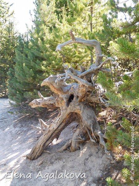 Продолжаю делится впечатлениями от поездки в Йе́ллоустон (Yellowstone National Park)— международный биосферный заповедник, объект Всемирного Наследия ЮНЕСКО, первый в мире национальный парк (основан 1 марта 1872 года). Находится в США, на территории штатов Вайоминг, Монтана и Айдахо. Парк знаменит многочисленными гейзерами и другими геотермическими объектами, богатой живой природой, живописными ландшафтами. ( взято из Википедии )  Мы останавливались в кемпингах в палатках. Парк произвел на нас огромное впечатление. Очень хочется поделится с вами красотой которую я увидела. В один фоторепортаж трудно вместить все увиденное поэтому это уже третий и будут еще...  фото 19