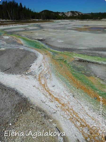 Продолжаю делится впечатлениями от поездки в Йе́ллоустон (Yellowstone National Park)— международный биосферный заповедник, объект Всемирного Наследия ЮНЕСКО, первый в мире национальный парк (основан 1 марта 1872 года). Находится в США, на территории штатов Вайоминг, Монтана и Айдахо. Парк знаменит многочисленными гейзерами и другими геотермическими объектами, богатой живой природой, живописными ландшафтами. ( взято из Википедии )  Мы останавливались в кемпингах в палатках. Парк произвел на нас огромное впечатление. Очень хочется поделится с вами красотой которую я увидела. В один фоторепортаж трудно вместить все увиденное поэтому это уже третий и будут еще...  фото 22
