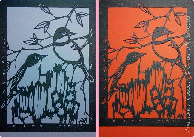 """Всем доброго времени суток! Вашему вниманию новая открытка с птичками. - Золотобрюхая зарянковая мухоловка (Eopsaltria australis) — это вид из семейства Австралийские зарянки, обитающий на в прибрежных районах восточной Австралии. -  Как и все австралийские мухоловки, предпочитает густые леса, дающие много тени. Охотится, сидя на стволе дерева, проводе или низко расположенной ветке и ловя пролетающих мимо насекомых. Питается в основном насекомыми, но также и другими мелкими беспозвоночными. -  Гнездится - как и многие другие австралийские птицы - обычно колониями. Гнездо - аккуратная чашечка, сплетённая из тонких растительных волокон и паутины - обычно располагается в развилке веток и великолепно замаскировано с помощью лишайников, мха, древесной коры и листьев. -  Эскиз для """"вырезалки"""" выполнен, изменён и доработан по цветной работе австралийского художника анималиста Eric shepherd. -  Размер открытки 12х16см. (как всегда:)) фото 12"""