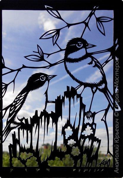 """Всем доброго времени суток! Вашему вниманию новая открытка с птичками. - Золотобрюхая зарянковая мухоловка (Eopsaltria australis) — это вид из семейства Австралийские зарянки, обитающий на в прибрежных районах восточной Австралии. -  Как и все австралийские мухоловки, предпочитает густые леса, дающие много тени. Охотится, сидя на стволе дерева, проводе или низко расположенной ветке и ловя пролетающих мимо насекомых. Питается в основном насекомыми, но также и другими мелкими беспозвоночными. -  Гнездится - как и многие другие австралийские птицы - обычно колониями. Гнездо - аккуратная чашечка, сплетённая из тонких растительных волокон и паутины - обычно располагается в развилке веток и великолепно замаскировано с помощью лишайников, мха, древесной коры и листьев. -  Эскиз для """"вырезалки"""" выполнен, изменён и доработан по цветной работе австралийского художника анималиста Eric shepherd. -  Размер открытки 12х16см. (как всегда:)) фото 15"""