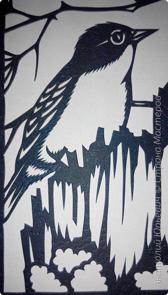 """Всем доброго времени суток! Вашему вниманию новая открытка с птичками. - Золотобрюхая зарянковая мухоловка (Eopsaltria australis) — это вид из семейства Австралийские зарянки, обитающий на в прибрежных районах восточной Австралии. -  Как и все австралийские мухоловки, предпочитает густые леса, дающие много тени. Охотится, сидя на стволе дерева, проводе или низко расположенной ветке и ловя пролетающих мимо насекомых. Питается в основном насекомыми, но также и другими мелкими беспозвоночными. -  Гнездится - как и многие другие австралийские птицы - обычно колониями. Гнездо - аккуратная чашечка, сплетённая из тонких растительных волокон и паутины - обычно располагается в развилке веток и великолепно замаскировано с помощью лишайников, мха, древесной коры и листьев. -  Эскиз для """"вырезалки"""" выполнен, изменён и доработан по цветной работе австралийского художника анималиста Eric shepherd. -  Размер открытки 12х16см. (как всегда:)) фото 6"""