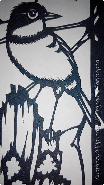 """Всем доброго времени суток! Вашему вниманию новая открытка с птичками. - Золотобрюхая зарянковая мухоловка (Eopsaltria australis) — это вид из семейства Австралийские зарянки, обитающий на в прибрежных районах восточной Австралии. -  Как и все австралийские мухоловки, предпочитает густые леса, дающие много тени. Охотится, сидя на стволе дерева, проводе или низко расположенной ветке и ловя пролетающих мимо насекомых. Питается в основном насекомыми, но также и другими мелкими беспозвоночными. -  Гнездится - как и многие другие австралийские птицы - обычно колониями. Гнездо - аккуратная чашечка, сплетённая из тонких растительных волокон и паутины - обычно располагается в развилке веток и великолепно замаскировано с помощью лишайников, мха, древесной коры и листьев. -  Эскиз для """"вырезалки"""" выполнен, изменён и доработан по цветной работе австралийского художника анималиста Eric shepherd. -  Размер открытки 12х16см. (как всегда:)) фото 7"""