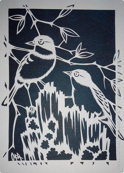 """Всем доброго времени суток! Вашему вниманию новая открытка с птичками. - Золотобрюхая зарянковая мухоловка (Eopsaltria australis) — это вид из семейства Австралийские зарянки, обитающий на в прибрежных районах восточной Австралии. -  Как и все австралийские мухоловки, предпочитает густые леса, дающие много тени. Охотится, сидя на стволе дерева, проводе или низко расположенной ветке и ловя пролетающих мимо насекомых. Питается в основном насекомыми, но также и другими мелкими беспозвоночными. -  Гнездится - как и многие другие австралийские птицы - обычно колониями. Гнездо - аккуратная чашечка, сплетённая из тонких растительных волокон и паутины - обычно располагается в развилке веток и великолепно замаскировано с помощью лишайников, мха, древесной коры и листьев. -  Эскиз для """"вырезалки"""" выполнен, изменён и доработан по цветной работе австралийского художника анималиста Eric shepherd. -  Размер открытки 12х16см. (как всегда:)) фото 5"""