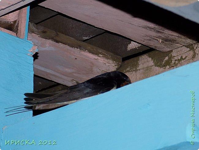 Доброго времения суток гостям моей странички!!! Хочу поделиться красотой природы моими глазами!!! Фото сделаны еще пару недель назад на даче, все никак не было времени показать. Ящерицу мой муж в гараже поймал и сфотографировал, она ему прям улыбалась :))) фото 17