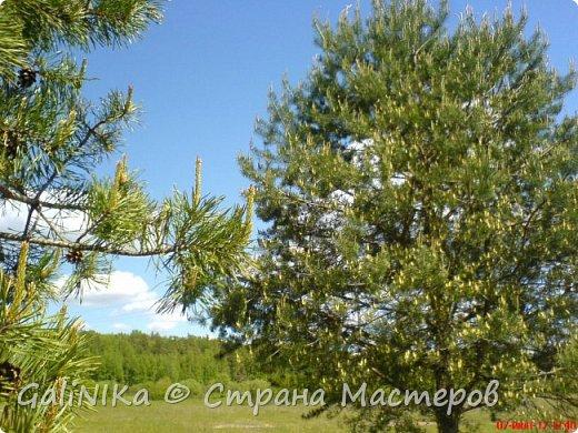 Каким бы лето не было –  в нём есть чему любоваться! В июне, июле и для меня нашлось … Река Луга в Ленинградской области.  фото 15