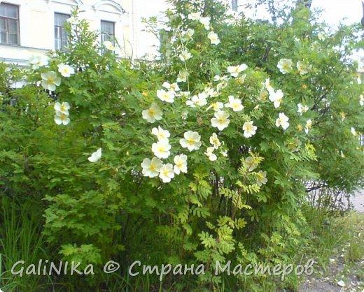 Каким бы лето не было –  в нём есть чему любоваться! В июне, июле и для меня нашлось … Река Луга в Ленинградской области.  фото 50