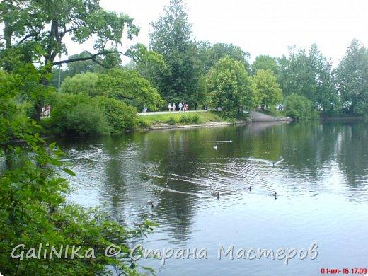 Каким бы лето не было –  в нём есть чему любоваться! В июне, июле и для меня нашлось … Река Луга в Ленинградской области.  фото 48